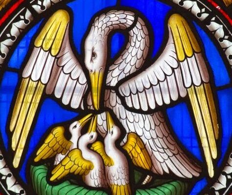 Pelican Stain Glass